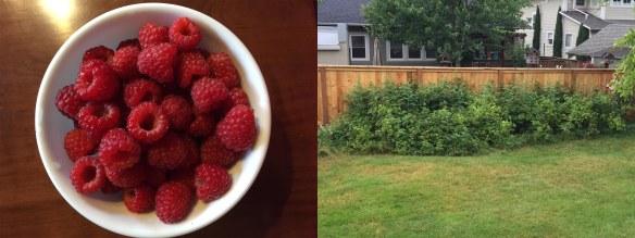 2015Raspberries
